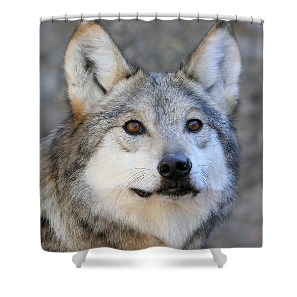 Curious Wolf Shower Curtain