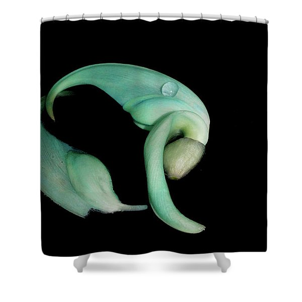 Curled Together Shower Curtain