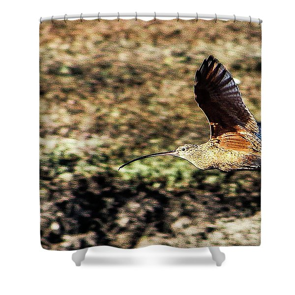 Curlew In Flight Shower Curtain