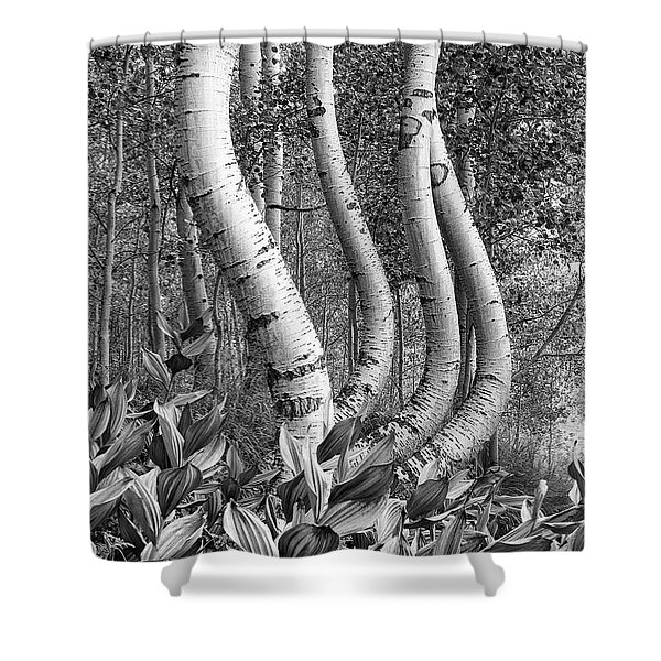 Curved Aspens Shower Curtain