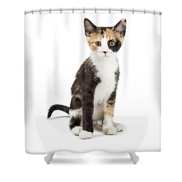 Cute Calico Kitten Sitting Looking Forward Isolated Shower Curtain