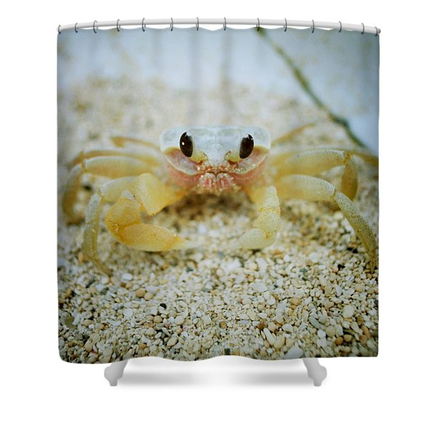 Cute Crab Shower Curtain