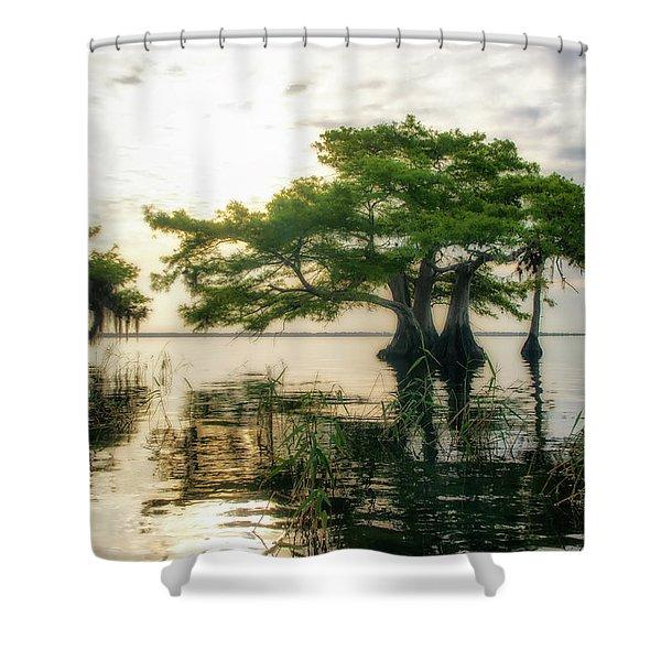Cypress Bonsai Shower Curtain