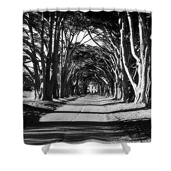 Cypress Tree Tunnel Shower Curtain