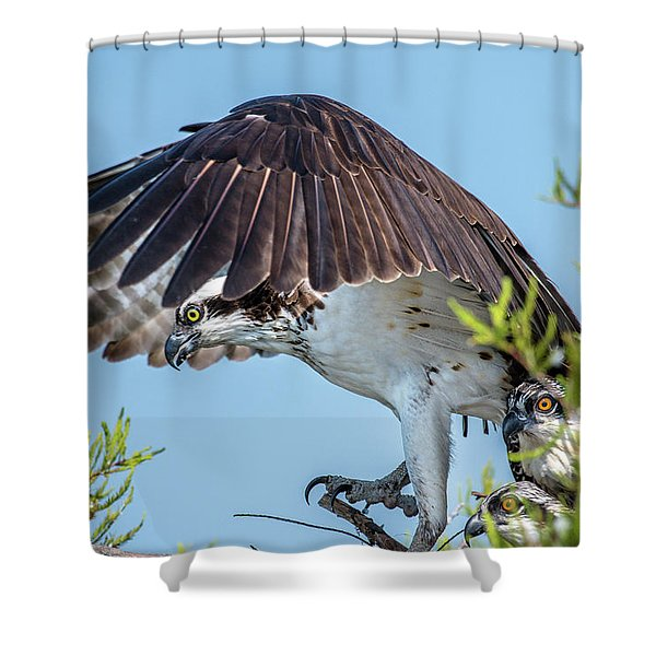 Daddy Osprey On Guard Shower Curtain