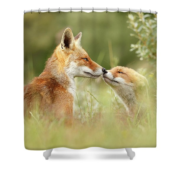 Daddy's Girl - Red Fox Father And Its Young Fox Kit Shower Curtain