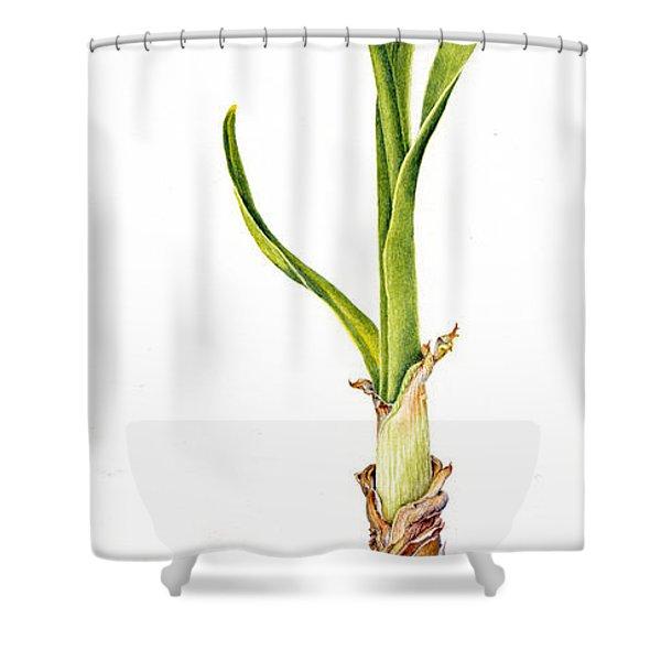 Daffodil And Bulb Shower Curtain