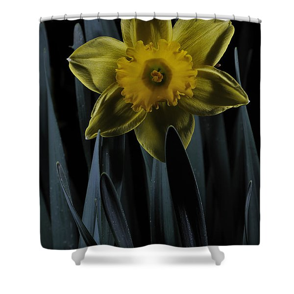 Daffodil By Moonlight Shower Curtain