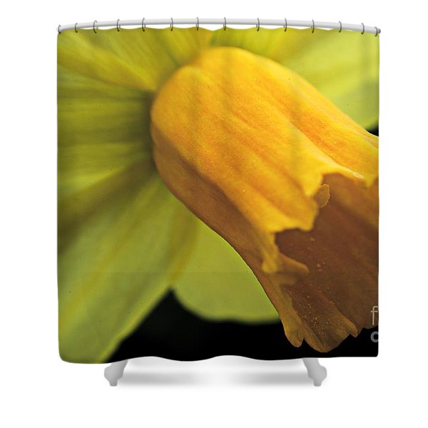 Daffodil - Narcissus - Portrait Shower Curtain