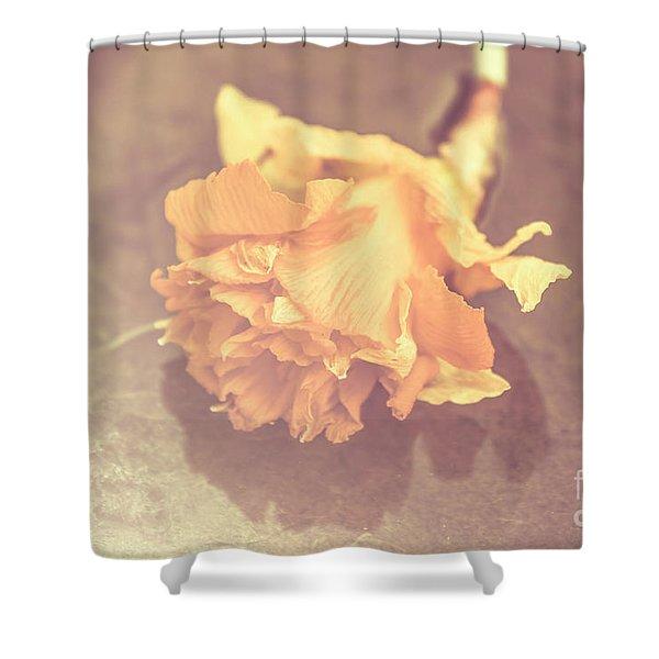 Daffodil Reflections  Shower Curtain