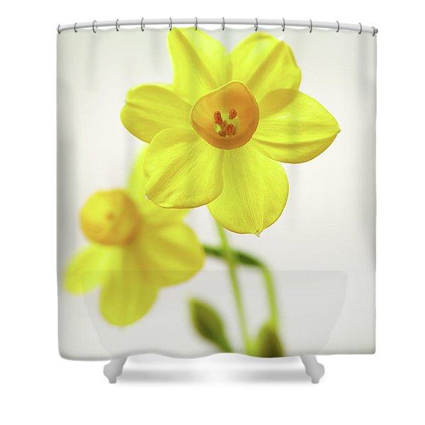 Daffodil Strong Shower Curtain