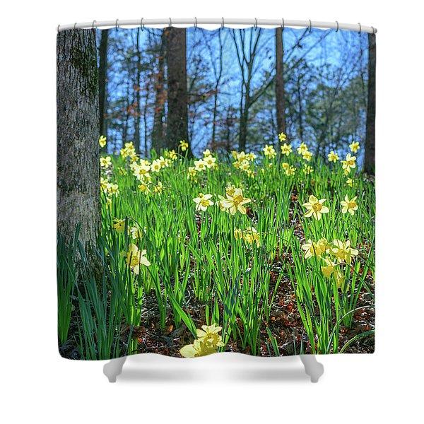 Daffodils On Hillside 2 Shower Curtain