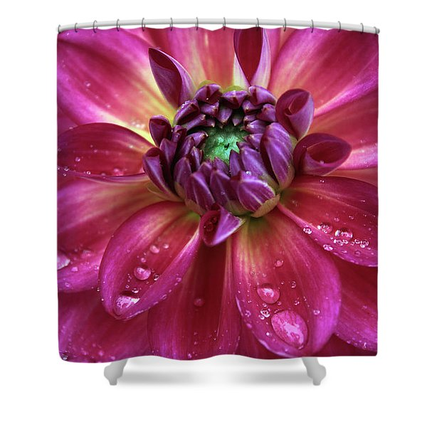 Dahlia Aglow Shower Curtain