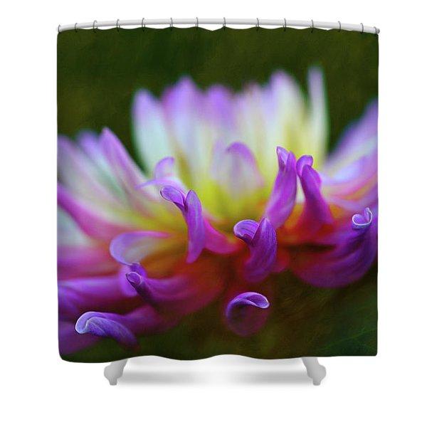 Dahlia Bloom  Shower Curtain