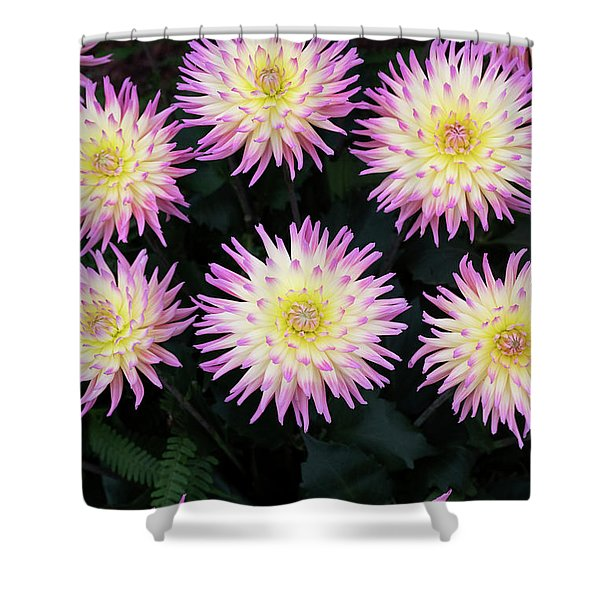 Dahlia Karma Sangria Flowers Shower Curtain
