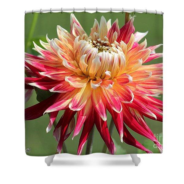 Dahlia Named Akita Shower Curtain