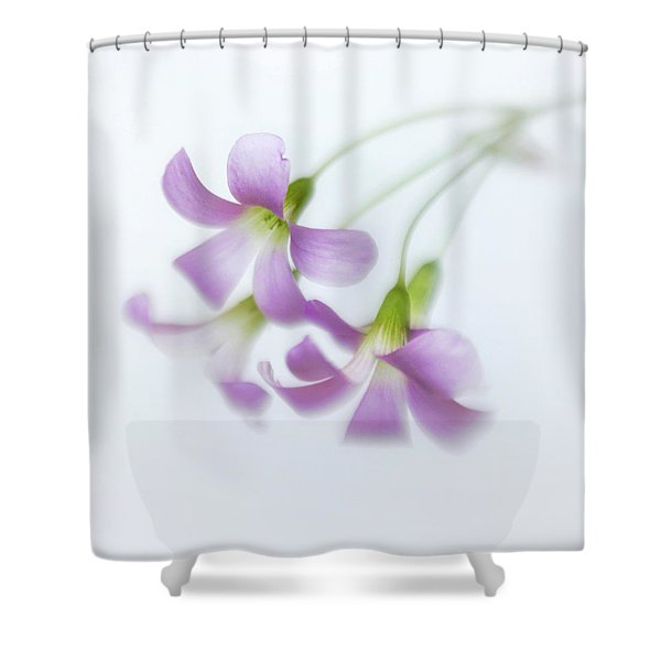 Dainty Blooms Of The Purple Shamrock Shower Curtain