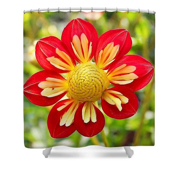 Dainty Dahlia Shower Curtain