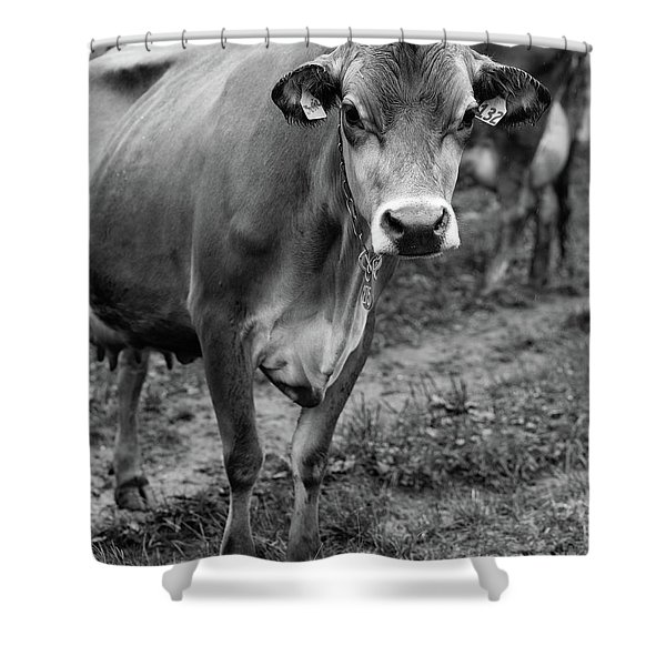 Dairy Cow Stowe Vermont Black And White Shower Curtain
