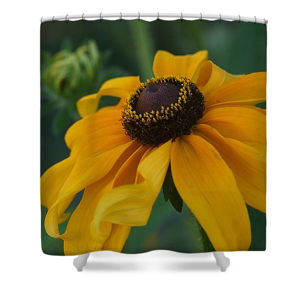 Daisy 3 Shower Curtain