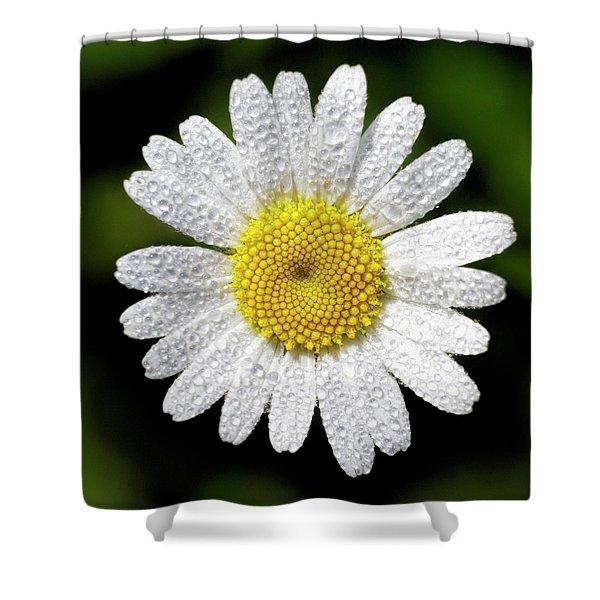 Daisy And Dew Shower Curtain