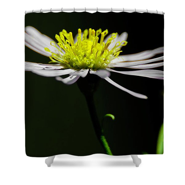 Daisy Center Stage Shower Curtain