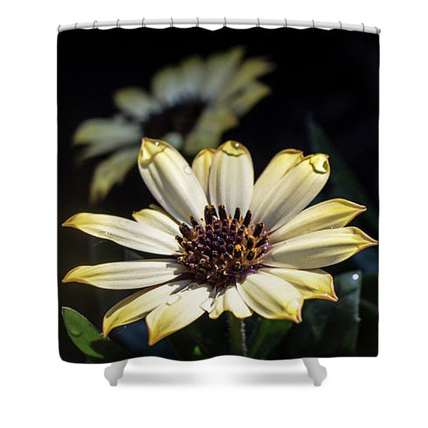 Daisydrops Shower Curtain