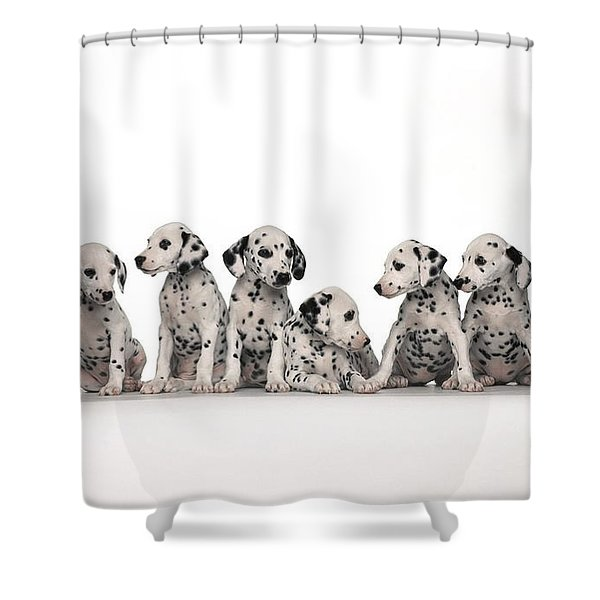 Dalmatian Shower Curtain