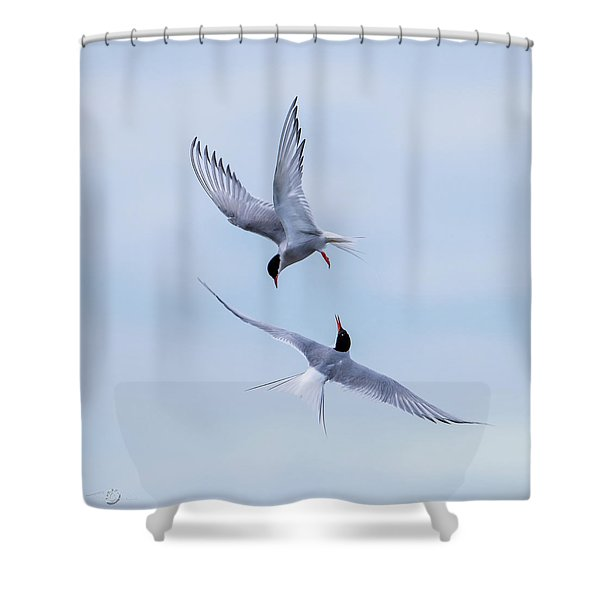 Dancing Arctic Terns Shower Curtain
