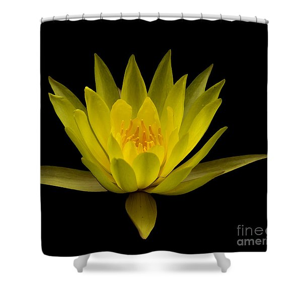 Shower Curtain featuring the photograph Dancing Yellow Lotus by David Millenheft
