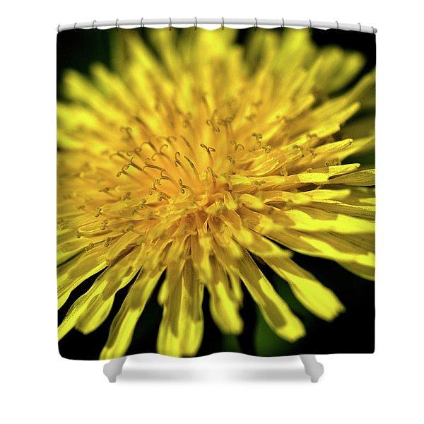 Dandelion Flower Shower Curtain