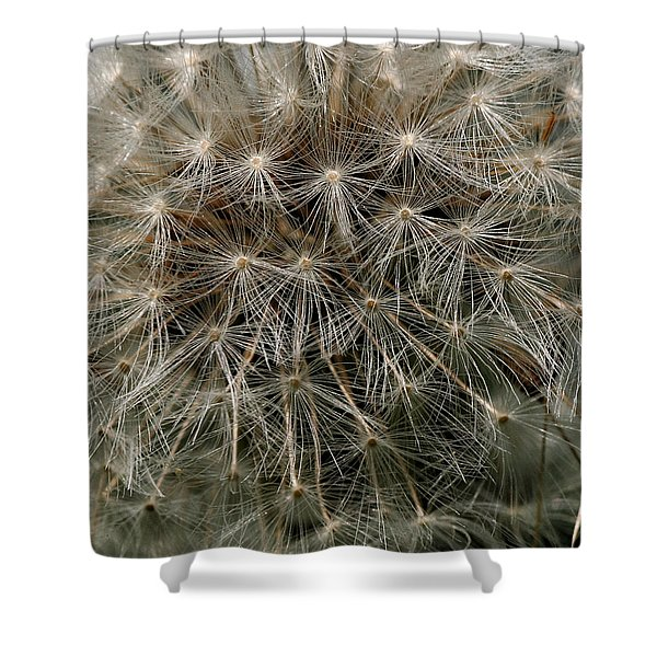 Shower Curtain featuring the photograph Dandelion Head by William Selander