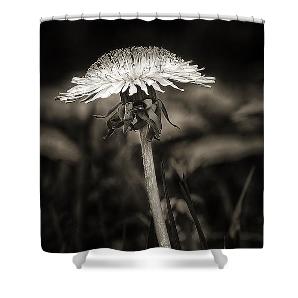 Dandelion In Black And Wite Shower Curtain