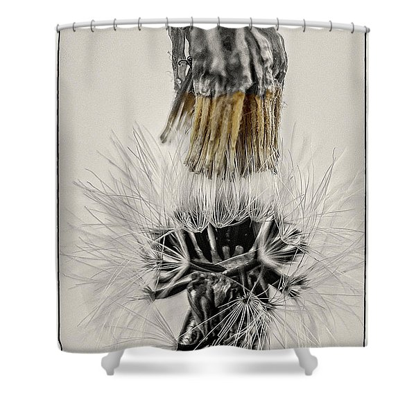 Dandelion Opening Up Shower Curtain