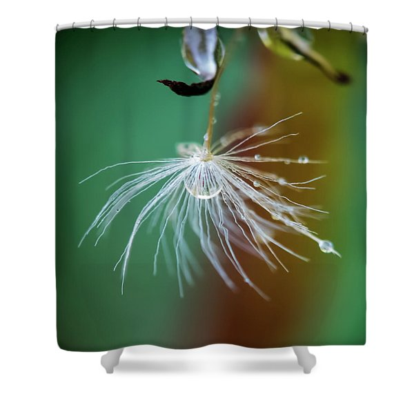 Dandelion Water Drop Macro 2 Shower Curtain