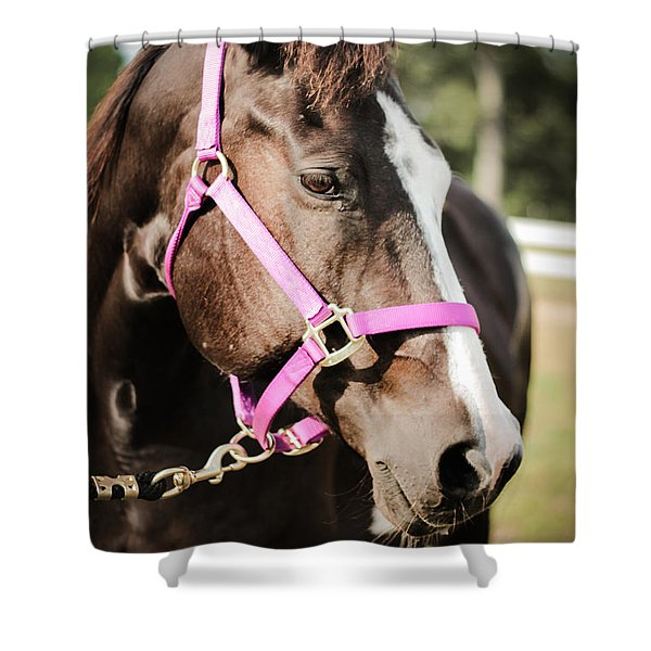 Dark Brown Horse In A Pink Bridle Shower Curtain
