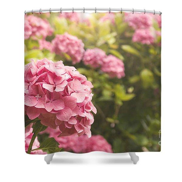 Dark Pink Hydrangea Shower Curtain