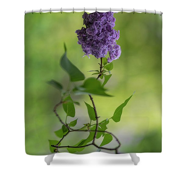 Shower Curtain featuring the photograph Dark Violet Lilac by Jaroslaw Blaminsky