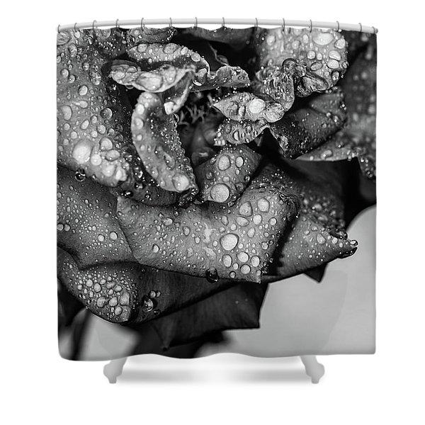 Dark Wet Rose Shower Curtain