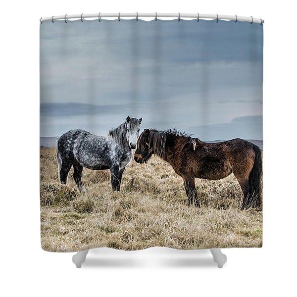 Dartmoor Ponies On Dartmoor Shower Curtain