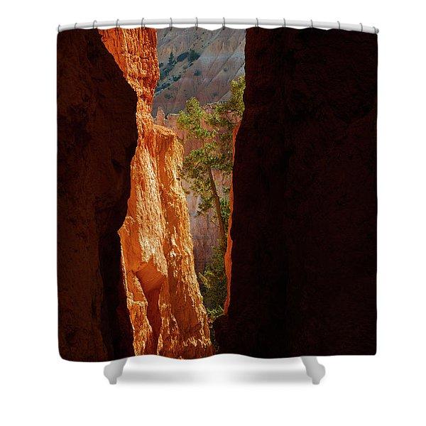 Daylight Shower Curtain