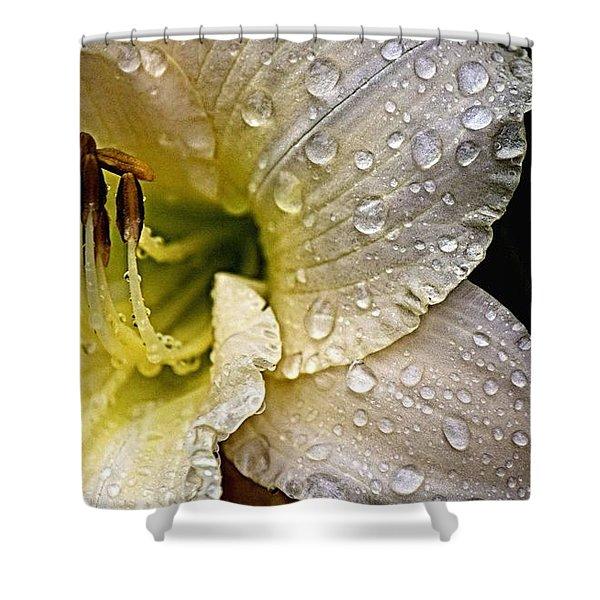 Daylilly 1 Shower Curtain
