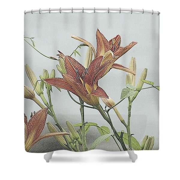 Daylilly Dreaming Shower Curtain