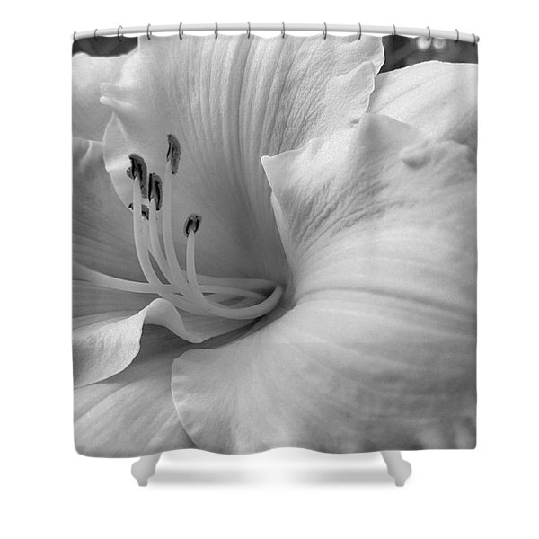 Daylily Delight In Black And White Shower Curtain