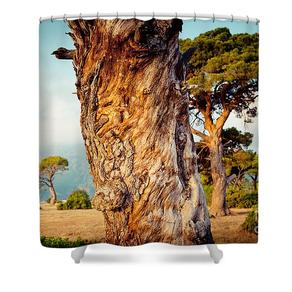 Dead Tree And Forest  Shower Curtain