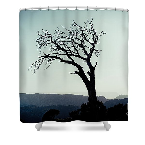 Dead Tree At The Sky Shower Curtain