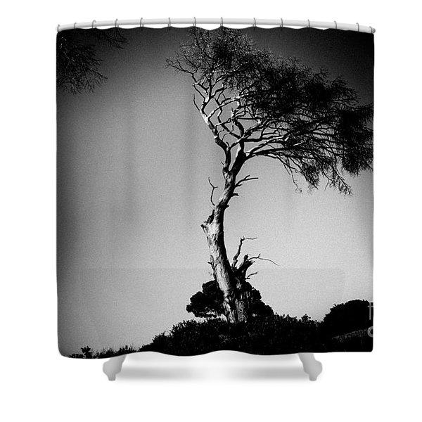 Dead Tree Bw Shower Curtain