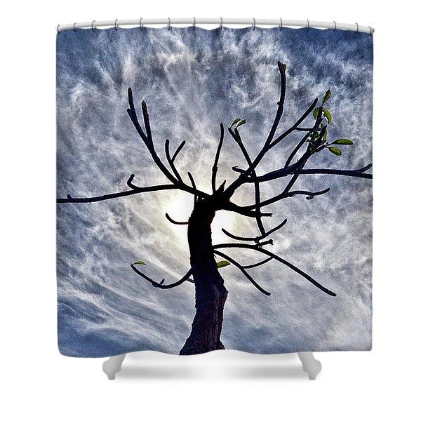 Dead Tree In St. Johns Antigua Shower Curtain