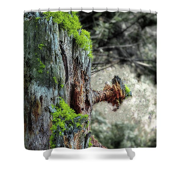 Death And Life Along The Path Shower Curtain