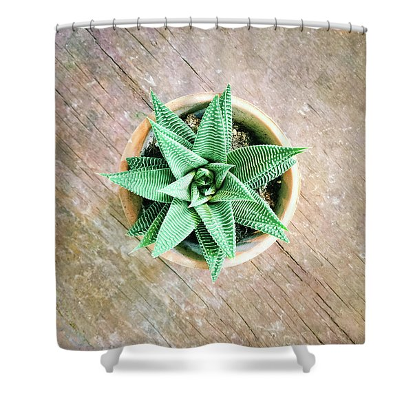 Decorative Aloe Plant On Old Wooden Surface Shower Curtain